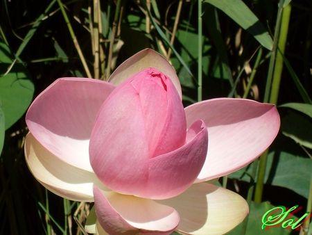 fleurs_06