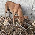 Maman chien 1
