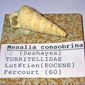 MESALIA CONSOBRINA 60.FERCOURT