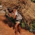Ca ne rigole pas le boulot des champs au Nepal!