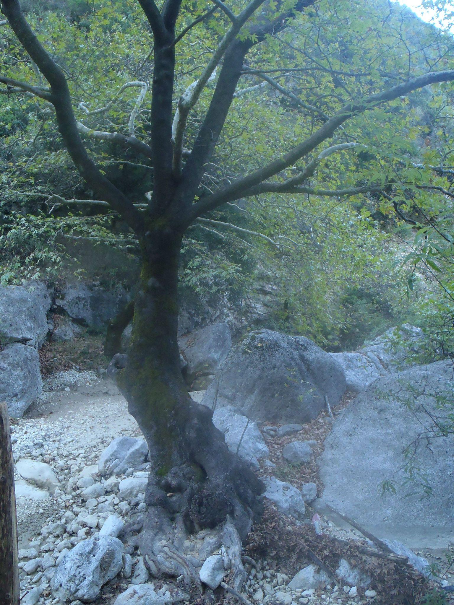 grèce lefkas ruisseau des cascades