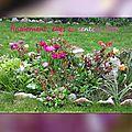 balanicole_2016_05_avril tulipes_70_finalement