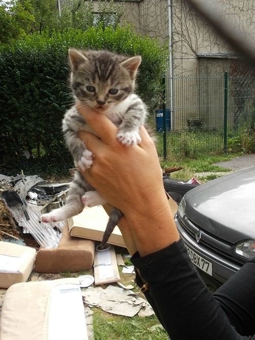 emerainville chaton 3