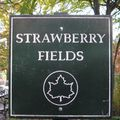 (imagine) rocky racoon at strawberry fields
