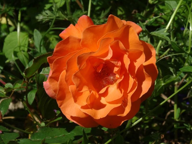 rosier louis de funes