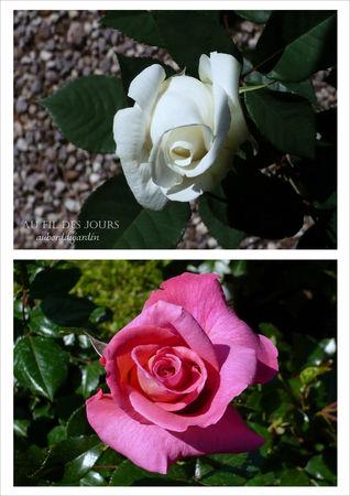 Salon_de_la_rose___Ch_teau_ste_Roseline_5