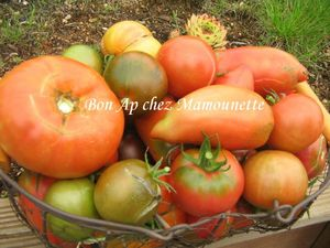 Tomates bio d'antan 002