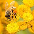 Vendredi 15 février : formation sur l'apiculture