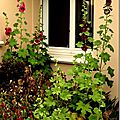 Windows-Live-Writer/jardin_D005/DSCF3885_thumb