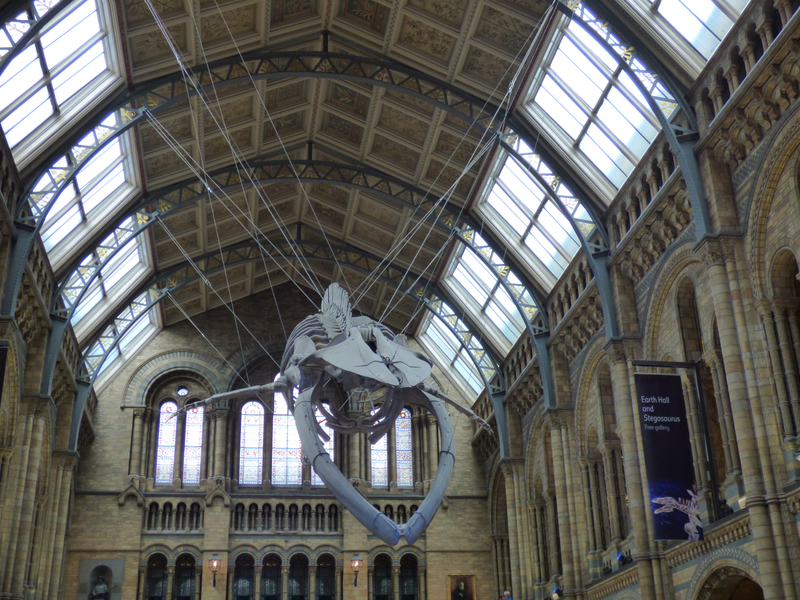 25 Londres Natural History Museum (9)