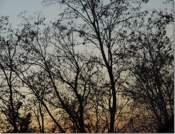 IVRY sur SEINE.09.03.2010 085