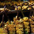 banane rosine
