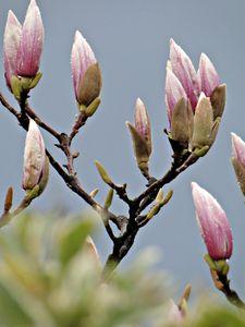 printemps_2010_038