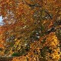 2- Week-end d'automne