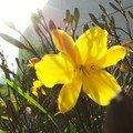 Bras 37 - fleurs