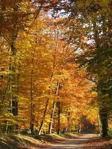 automne-arbre-foret-fontainebleau