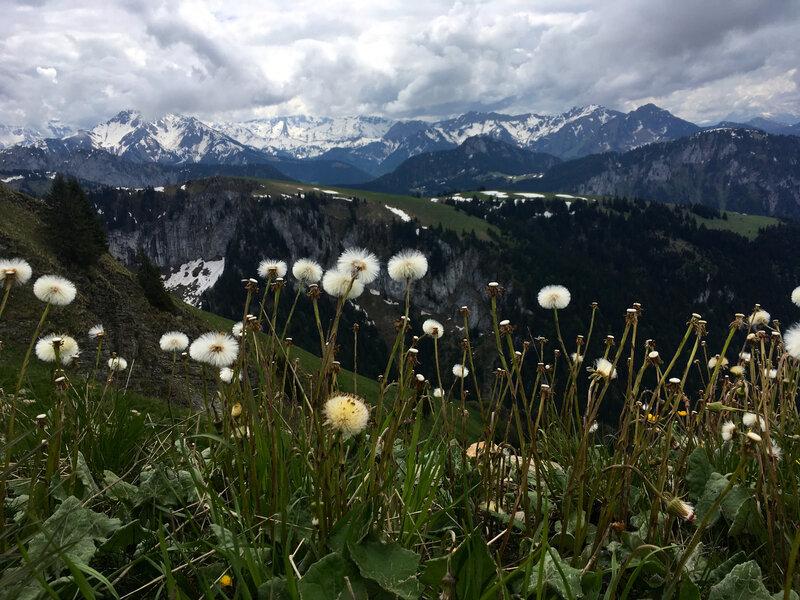 entre pissenlit et montagne