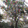 2009-09-14 Swayambunath (153)