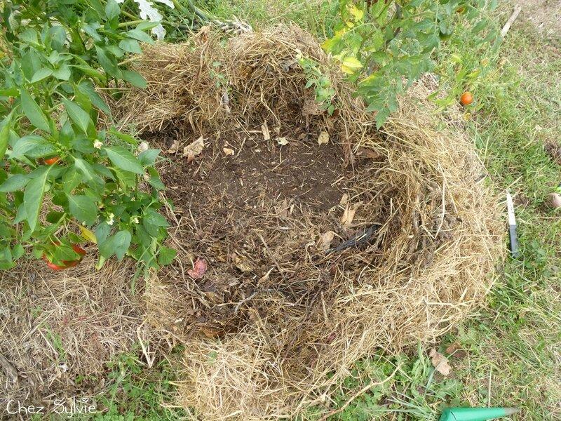 Potager permaculture septembre03