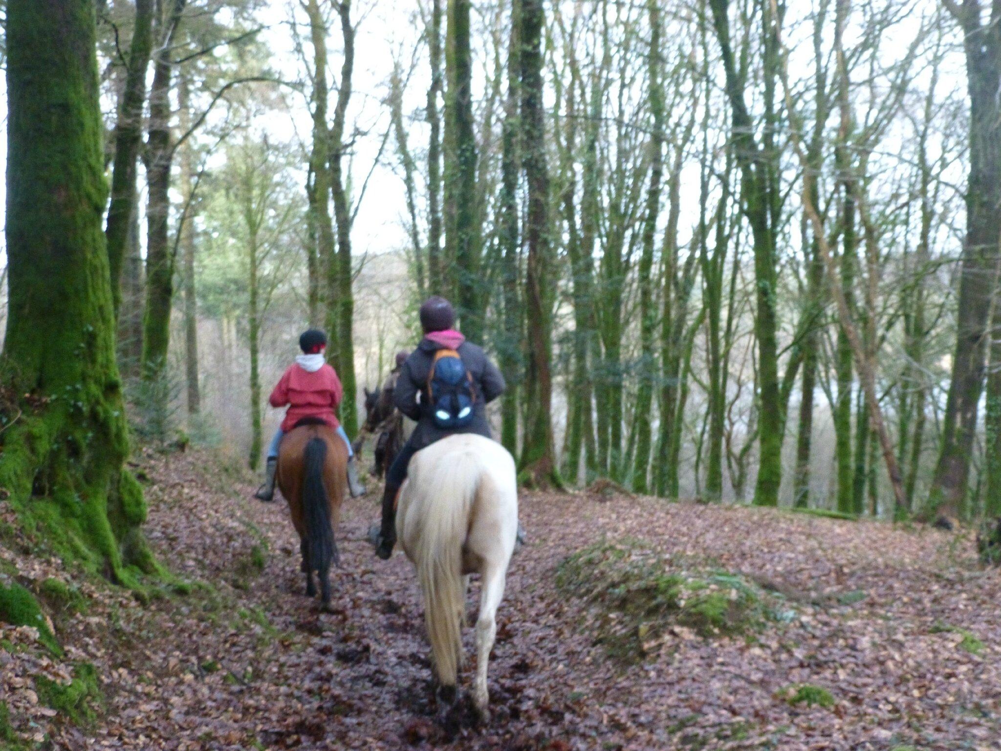 Balade à cheval dans la forêt P1080279