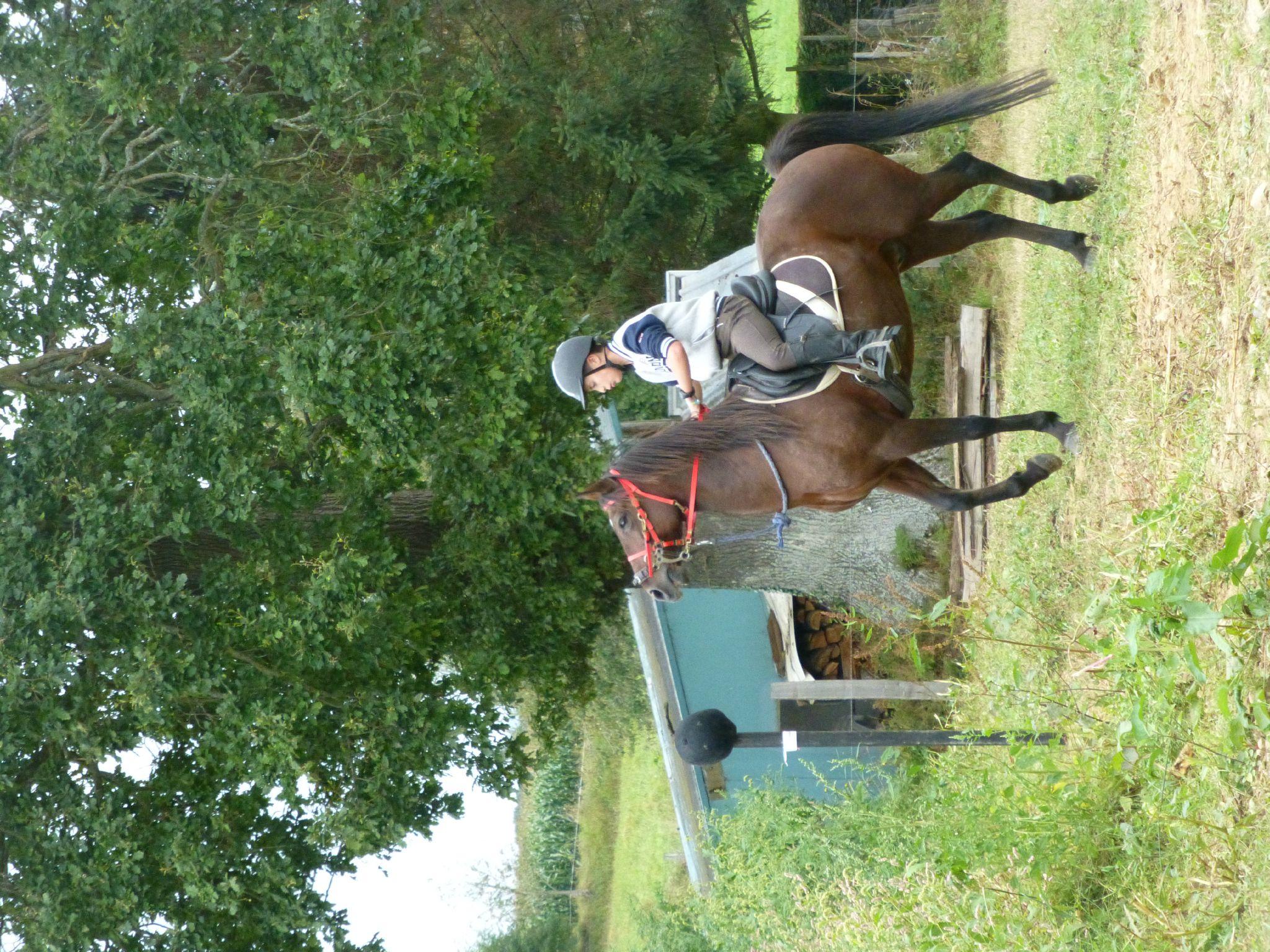 Jeux équestres manchots - parcours de pleine nature après-midi (308)