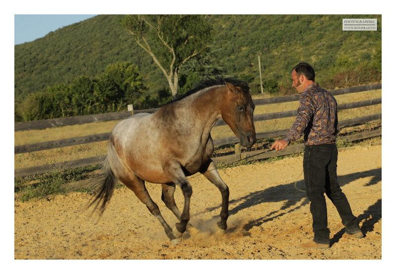 hotos JMP©Koufra 12 - El Rancho - Le Mas de Sisco - 25082020 - 0733