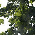 fleurs-de-breche (93)