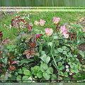 balanicole_2017_05_le printemps des tulipes_53_nightrider