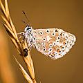 papillon mont césar61