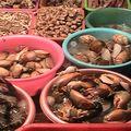 2010-11-22 Hanoi x
