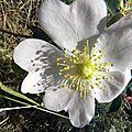 fleurs-roses (6)