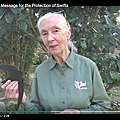Jane goodall plaide pour les martinets !