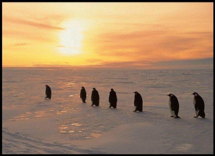 antarctique 22