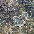 Bali : premières plongées : gili islands