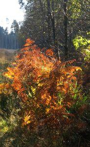 automne_2009082