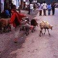 Scènes d'Addis Abeba