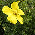 jaune_4 (5)