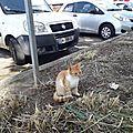 3 chats abandonnés plage sud BT 2