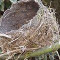 Nid d'oiseau déserté