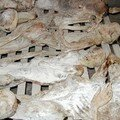 Rwandan_Genocide_Murambi_bodies