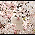 chat printemps