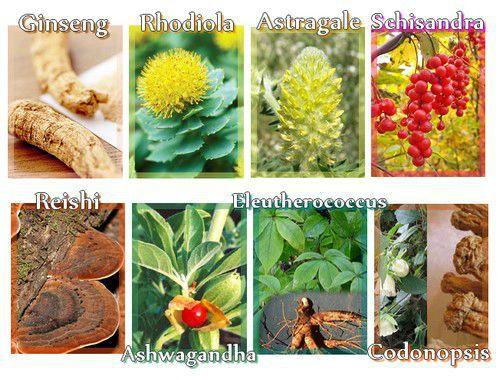 Qu'est ce qu'une plante adaptogène