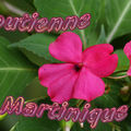 Bandeau_blog_martinique_copie