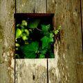 Fenêtre sur végétation