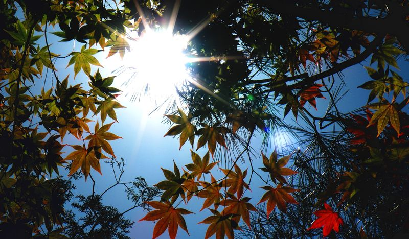 Japon_Kyoto_2009_146b