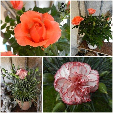fleurs boulangère