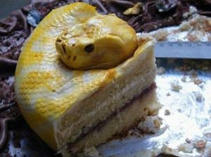 gateau-serpent-jaune-5