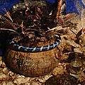 canari atoumgble (pour avoir la force mystique) du maitre marabout ahovissi canari atoumgble (pour avoir la force mysti