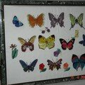Grand cadre papillons