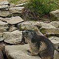 05 Les Marmottes (22)
